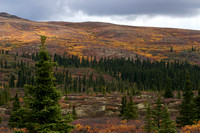 Fall colors, Denali Park, Alaska